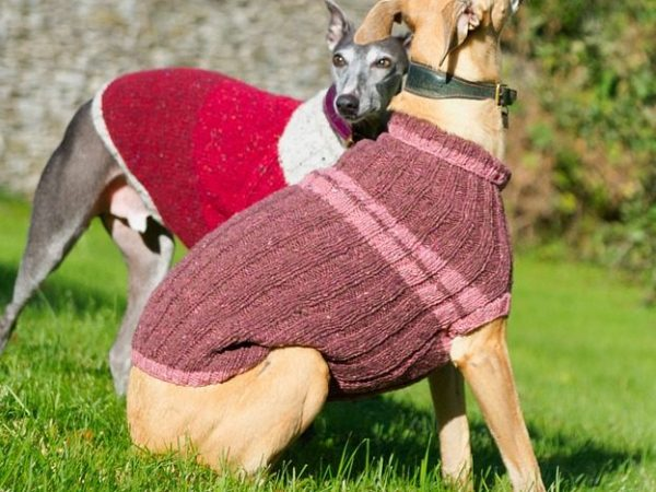 Sweater for Dogs: Features and Varieties - Post Thumbnail