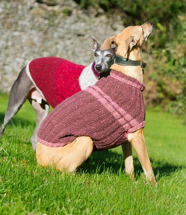 Reviews and properties of the best sweaters for dogs large